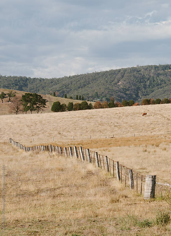 A Meandering Fence on an Australian Farm by Gary Radler Photography for Stocksy United