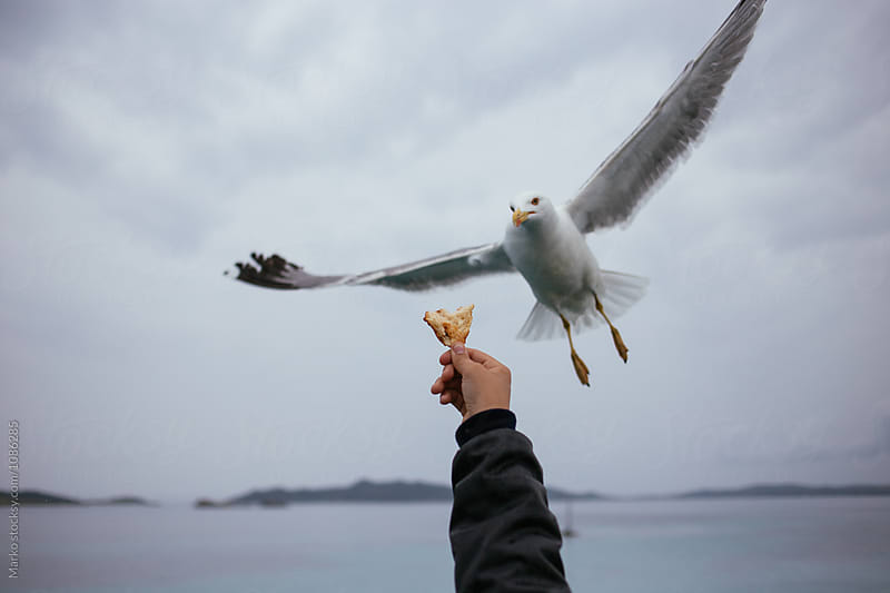 Men hand feeding seagull by Marko Milovanović for Stocksy United