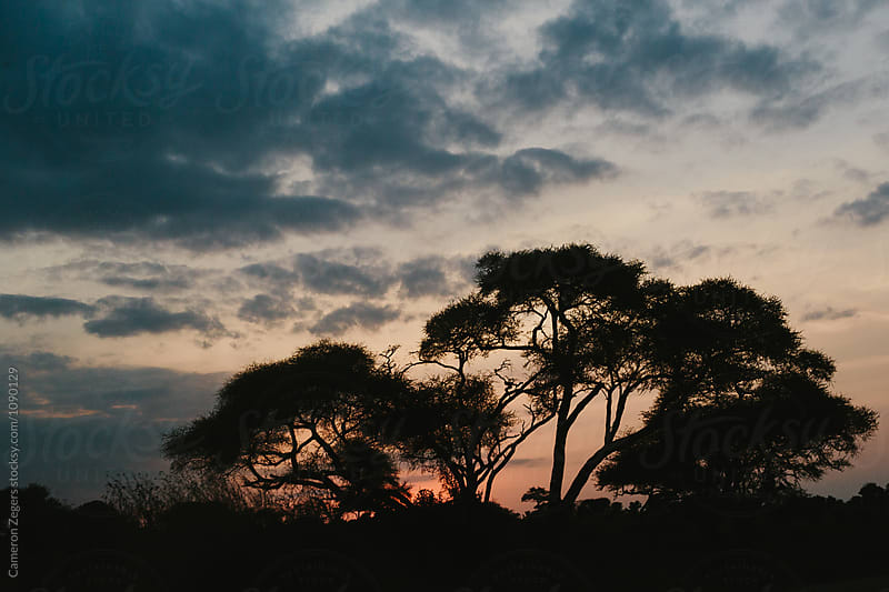 African safari sunset by Cameron Zegers for Stocksy United