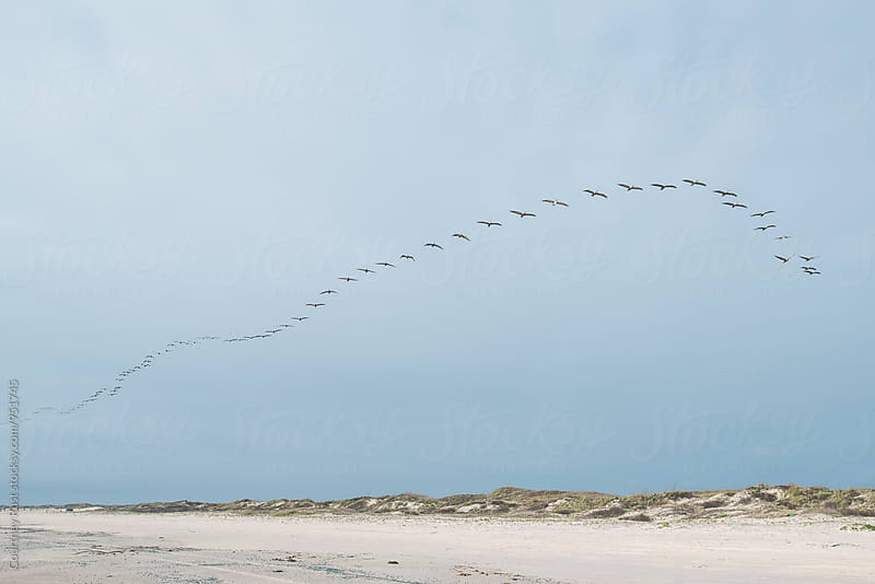 Pelicans flying over the Coast by Courtney Rust for Stocksy United