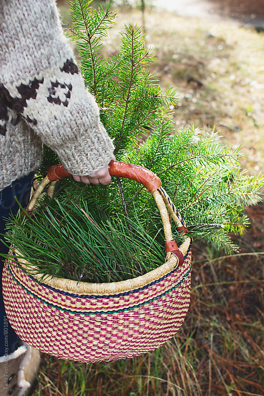 woven basket full of green pine branches by Tana Teel for Stocksy United