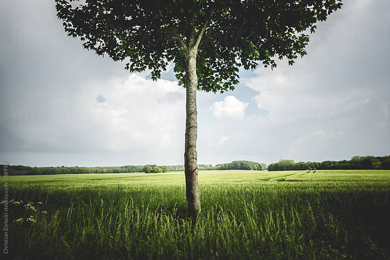 Single tree in a meadow by Christian Zielecki for Stocksy United