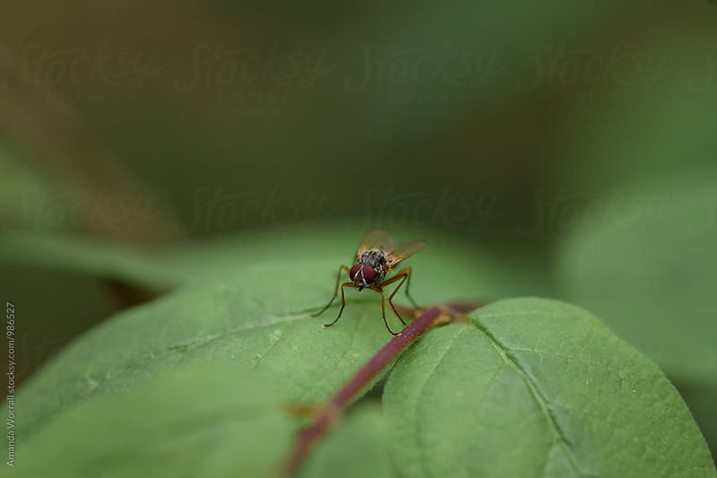 Macro of a fly on a leaf by Amanda Worrall for Stocksy United