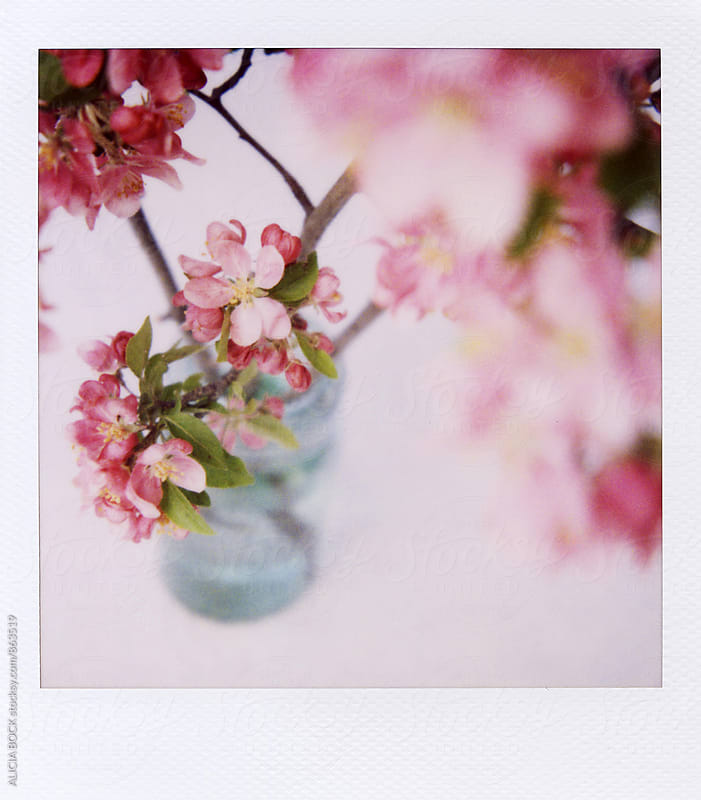 Polaroid Of Pink Crab Apple Flowers In A Blue Jar by ALICIA BOCK for Stocksy United