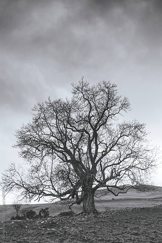 Ancient tree. by Darren Muir for Stocksy United