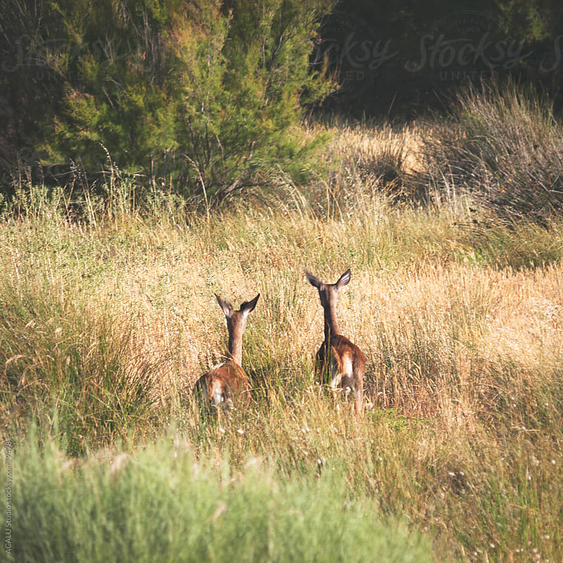 Couple of deer by ACALU Studio for Stocksy United
