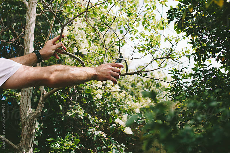 Man pruning by Jacqui Miller for Stocksy United