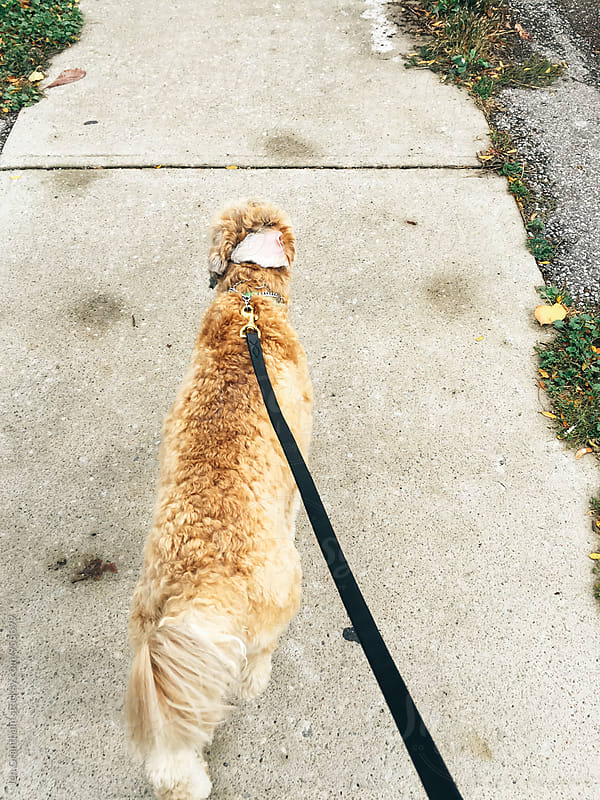 First person view of a dog walking on leash by Jen Grantham for Stocksy United