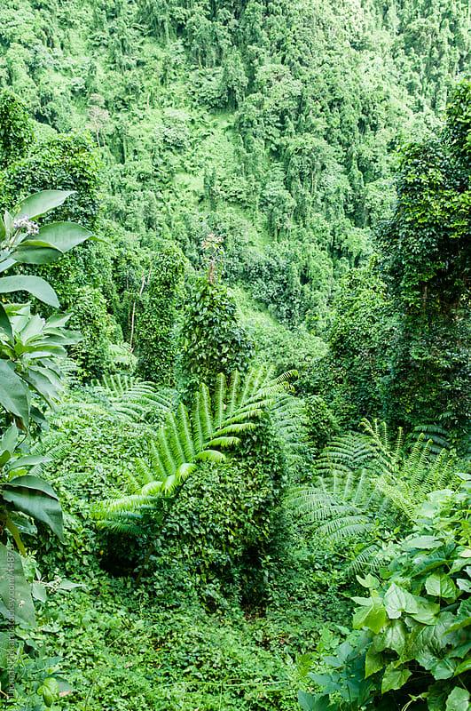 Jungle, Rarotonga Island, Cook Islands. by Thomas Pickard for Stocksy United