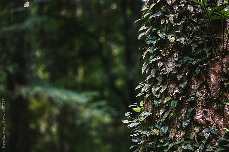 Closeup of green tree in dense rainforest in Thailand. by Soren Egeberg for Stocksy United