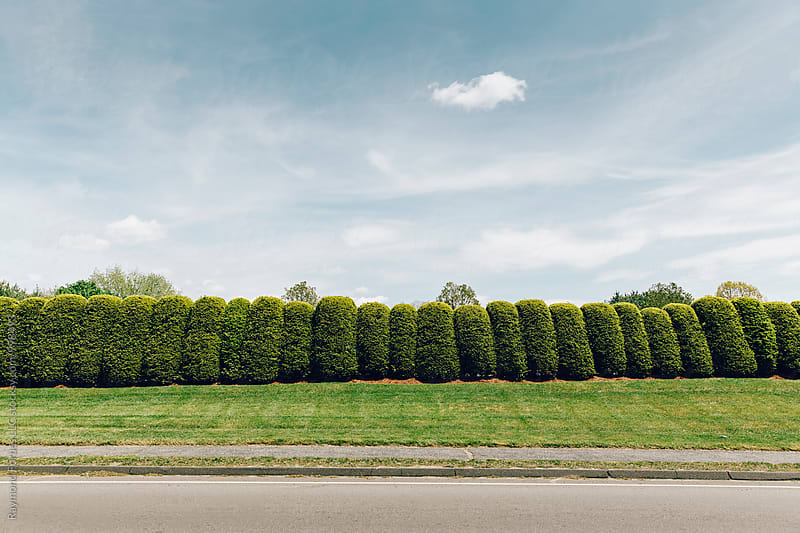 Lone Cloud above Hedge  by Raymond Forbes LLC for Stocksy United