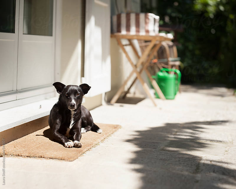 Dog laying on doormat under summer sun by Laura Stolfi for Stocksy United
