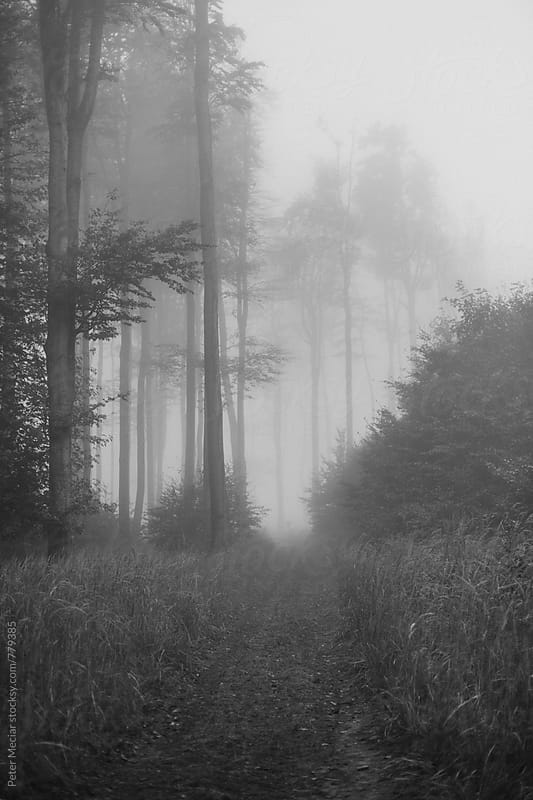 Foggy forest by Peter Meciar for Stocksy United