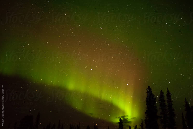 Northern Lights (Aurora Borealis) Silhouettes Trees by Willie Dalton for Stocksy United