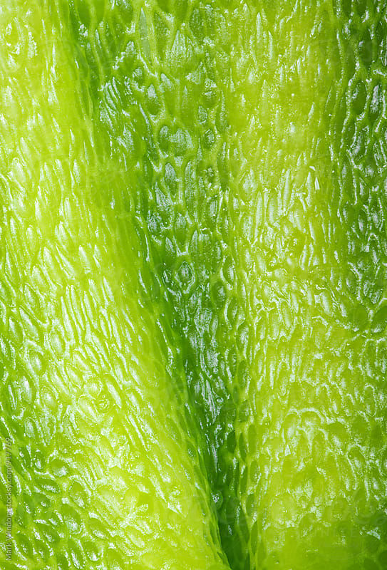 Green pepper interior, closeup by Mark Windom for Stocksy United