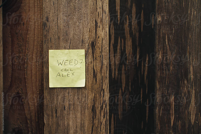 looking for weed by Jess Lewis for Stocksy United