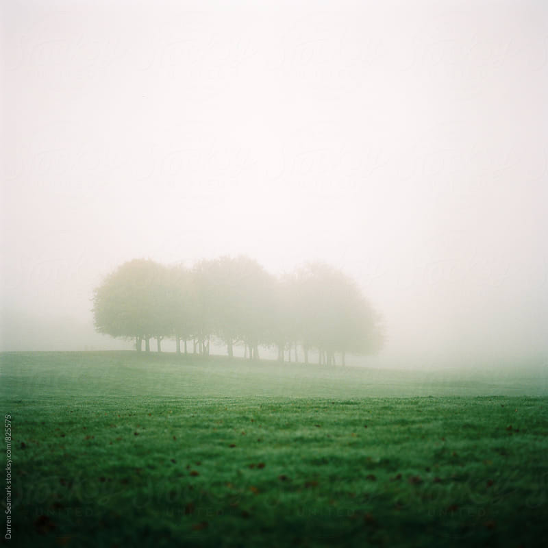 Copse of trees engulfed in fog  by Darren Seamark for Stocksy United