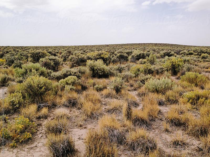 Desert landscape by Dylan M Howell Photography for Stocksy United