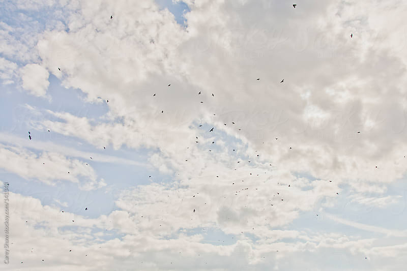 Blue sky by Carey Shaw for Stocksy United
