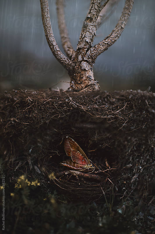 A moth sleeps within the roots and dirt at the heart of a plant by Rachel Bellinsky for Stocksy United