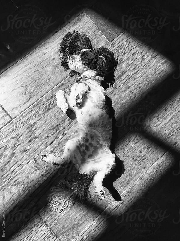 Dog Relaxing In The Sun by Ronnie Comeau for Stocksy United