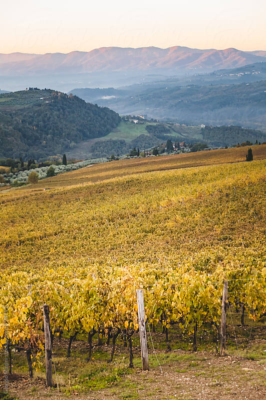 Tuscan Landscape with Vineyards in Autumn by Giorgio Magini for Stocksy United