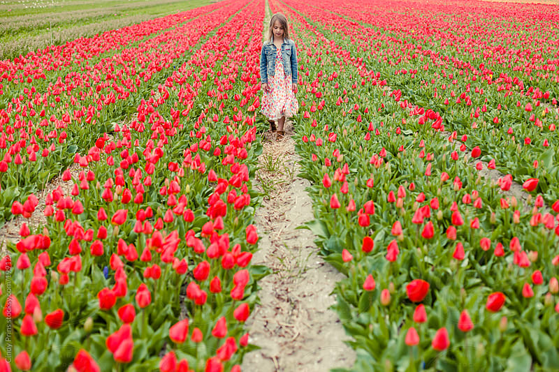 Little girl walking through a field of red tulips by Cindy Prins for Stocksy United