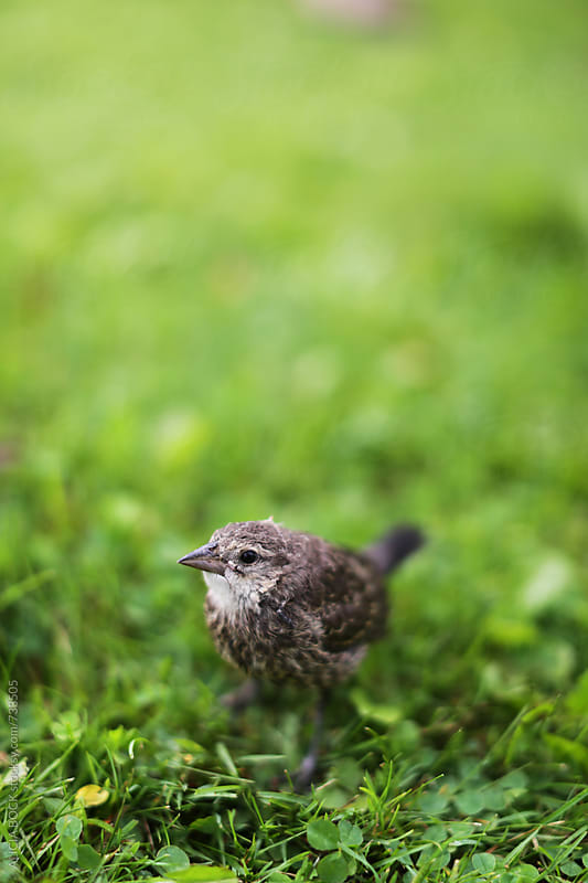 A Small Bird Rests In A Patch of Green Grass by ALICIA BOCK for Stocksy United
