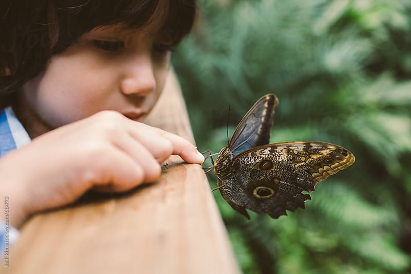An Owl Butterfly Inspects Young Boy's Finger With Probiscus by Kelli Seeger Kim for Stocksy United