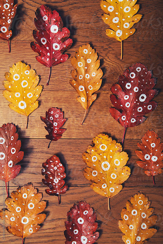Dotty for autumn leaves... by Catherine MacBride for Stocksy United