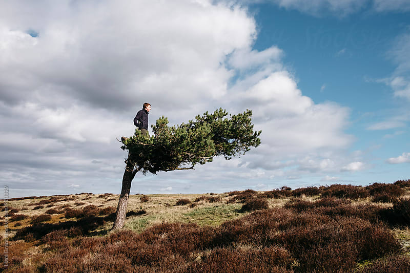 Male standing in a windswept tree on Ramsley Moor. Derbyshire, UK. by Liam Grant for Stocksy United