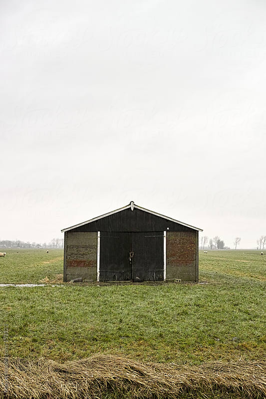 Simple shed in a meadow with sheep by Marcel for Stocksy United