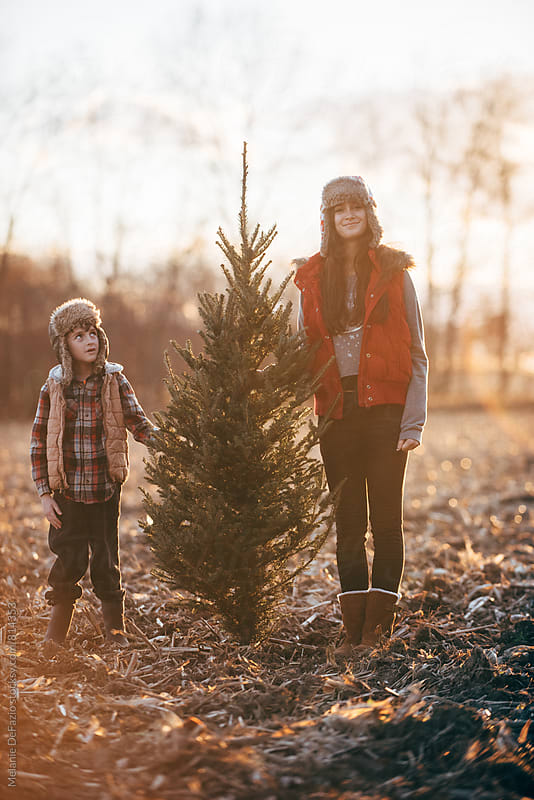christmas tree by Melanie DeFazio for Stocksy United