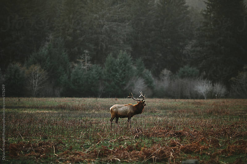 Elk by Dylan M Howell Photography for Stocksy United