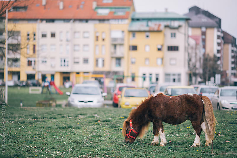 Little pony horse in a neighbourhood by Maja Topcagic for Stocksy United