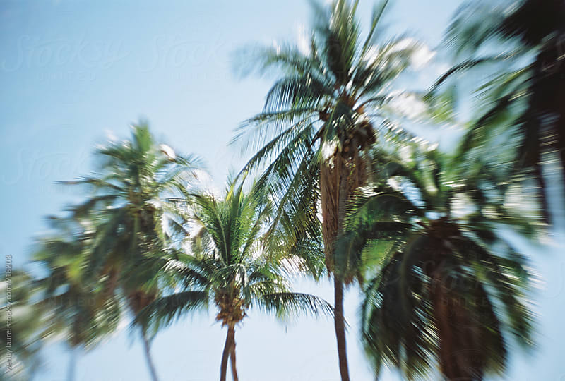 row of palm trees against bright blue sky in hawaii by wendy laurel for Stocksy United