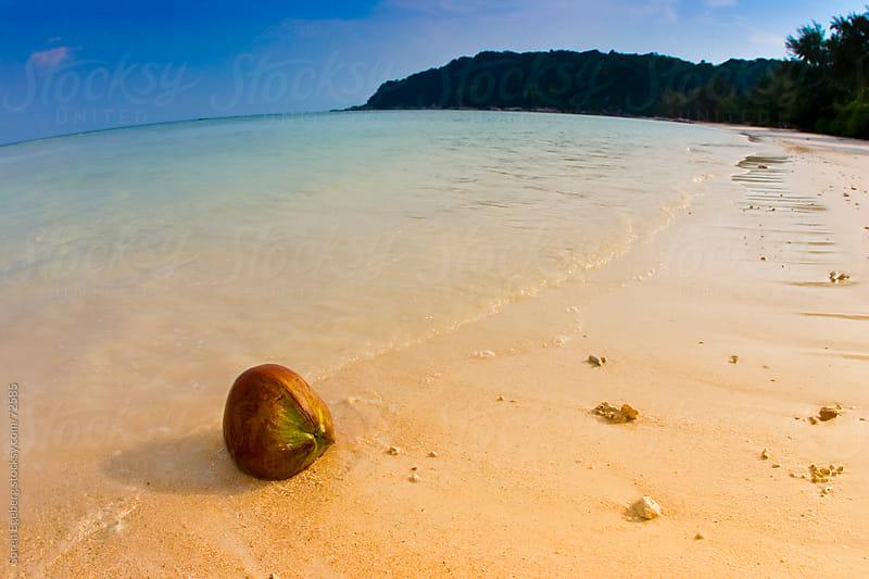 Coconut on tropical island beach  by Soren Egeberg for Stocksy United