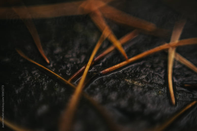 Dead pine needles laying on bark by Justin Mullet for Stocksy United
