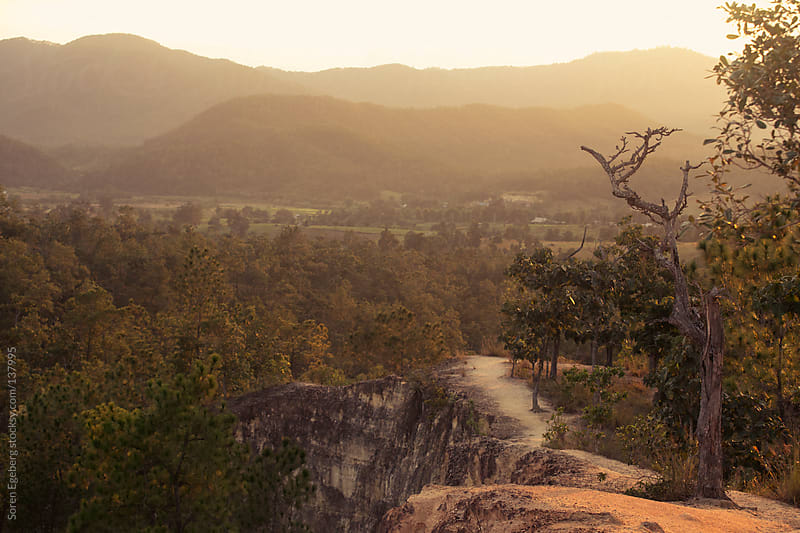 Sunset mountain landscape with old tree in forground by Soren Egeberg for Stocksy United