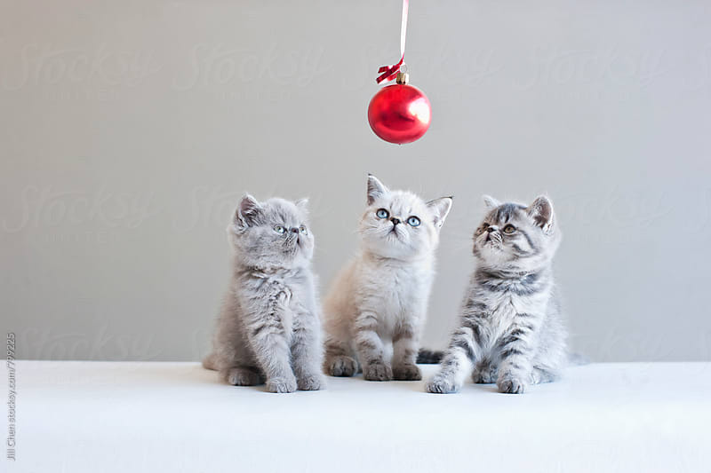 Three Kittens and a Christmas Ball by Jill Chen for Stocksy United