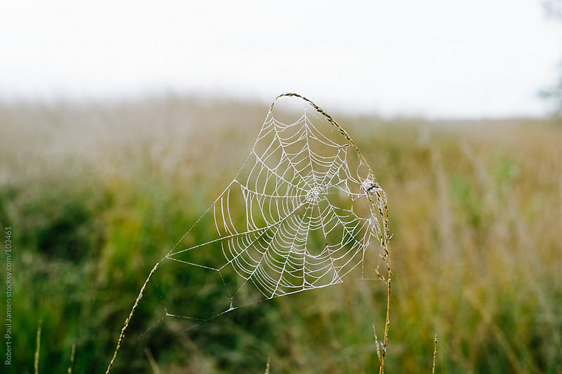 Spider Web above Heath by Robert-Paul Jansen for Stocksy United