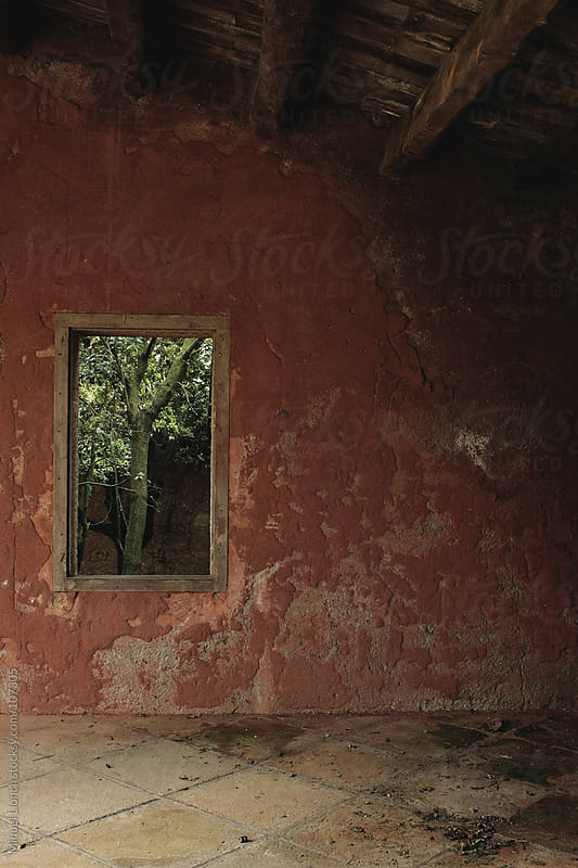 Old inside red wall with window and tree by Miquel Llonch for Stocksy United