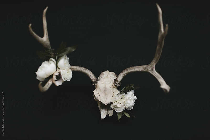 White flowers on deer skull with dark background by Nicole Mason for Stocksy United