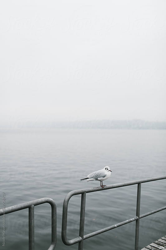 bird sitting on railing by dock at foggy lake by Nicole Mason for Stocksy United