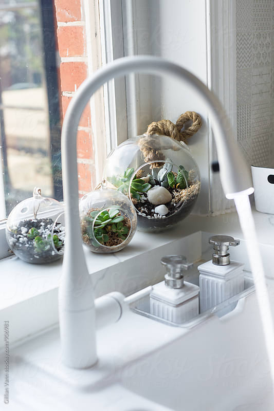 succulent terrarium by the kitchen window by Gillian Vann for Stocksy United
