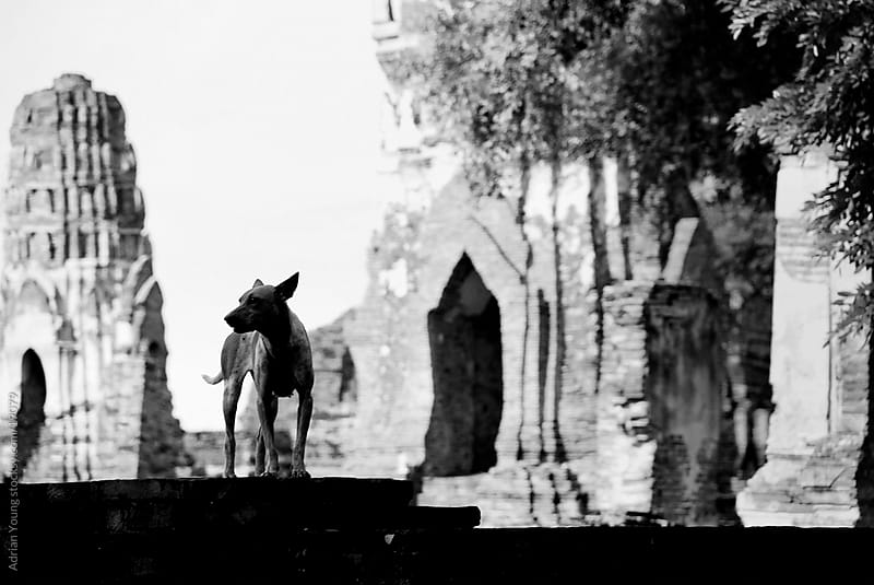 Guard of Ayutthaya by Adrian P Young for Stocksy United