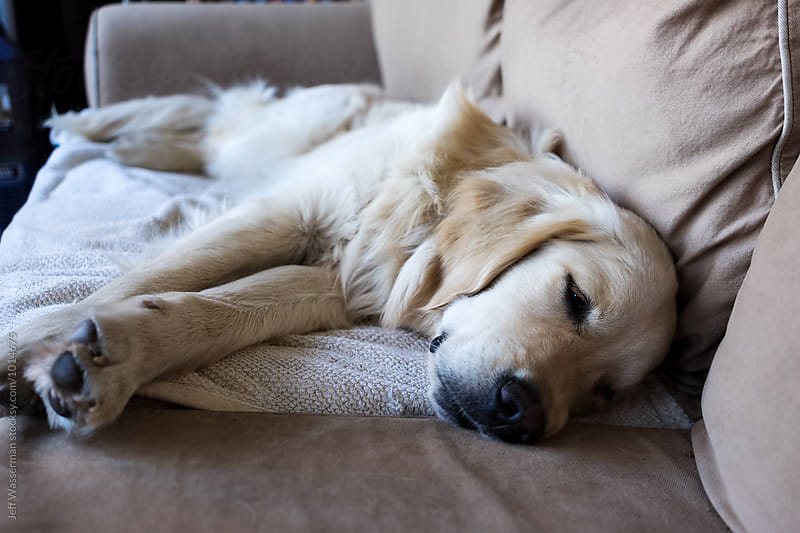 Dog Sleeping on Sofa by Jeff Wasserman for Stocksy United