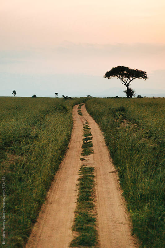 Beautiful Long Path on African Safari by B. Harvey for Stocksy United