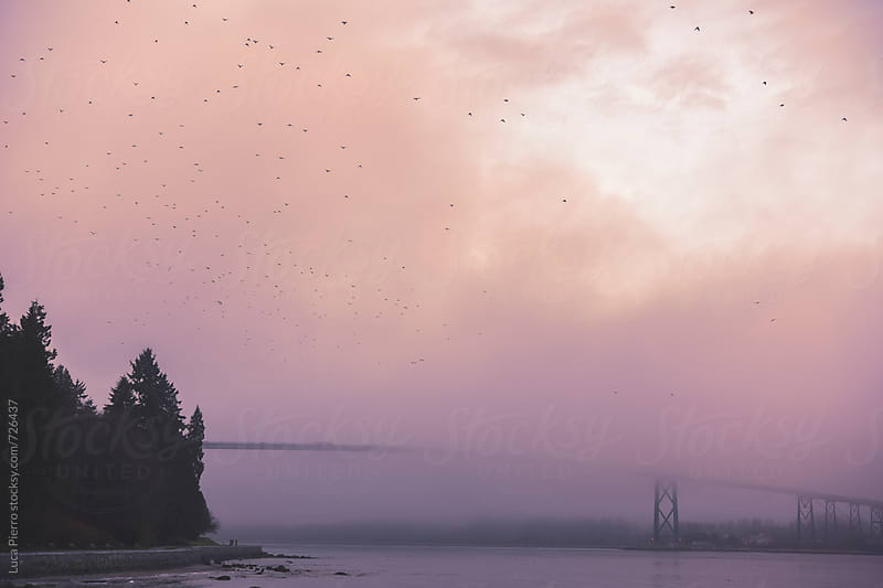 Stanley Park at sunset, Vancouver by Luca Pierro for Stocksy United
