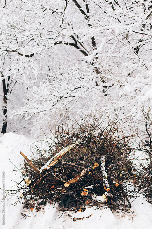 Pile of broken branches and trees during winter by Borislav Zhuykov for Stocksy United